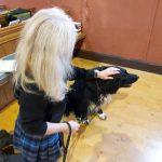 Sunday 20 October - Pet Service
